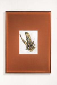 marco papa tiger pigeon